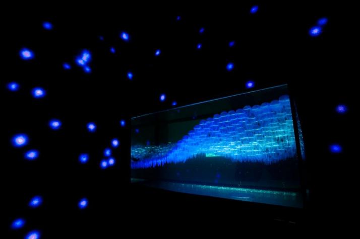 Abysses Ambiant responsive aquarium Aquarium designed by Fabio Colucci, Maxime Baillard (Interior Architecture department),  with Alexandre Burdin-Fra