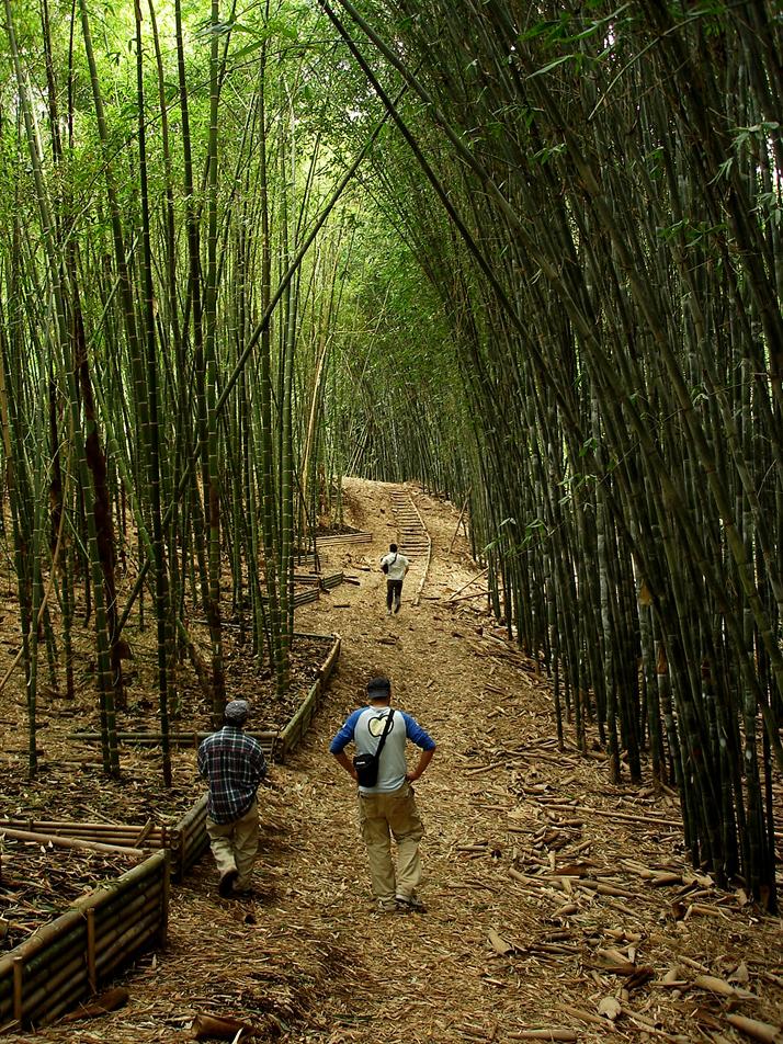 Image Courtesy of Bamboocycles