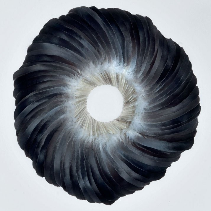 SEPAL III (2011) © Kate MccGwirePigeon feathers on Board framed41 x 41 x 7 cmPhoto  © Tessa Angus