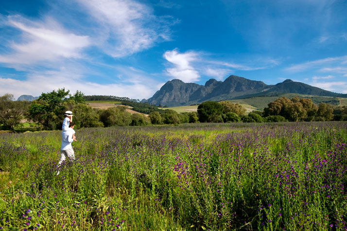 Wild flowers with Simonsberg backdrop, photo © Babylonstoren