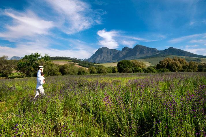 Wild flowers with Simonsberg backdrop, photo © Babylonstoren