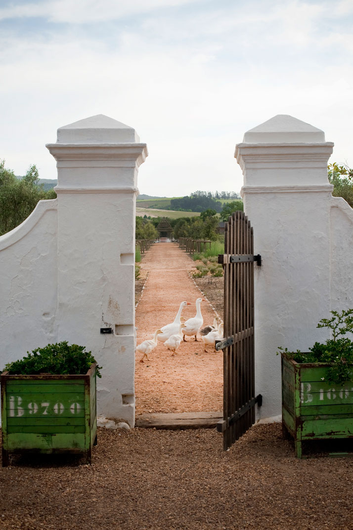 Garden old gate - view to garden, photo © Babylonstoren