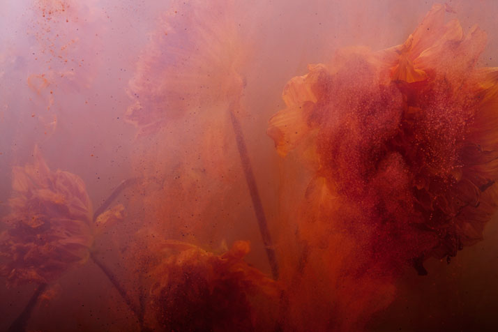 PHOTO: COPE/ARNOLDPROJECT: STAMEN