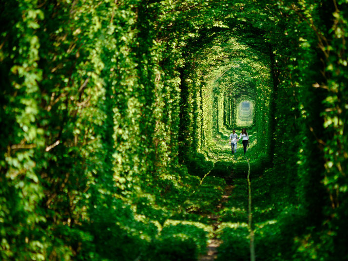 The 'Tunnel of LOVE' near the town of Klevan in Ukraine.photo © Amos Chapple.