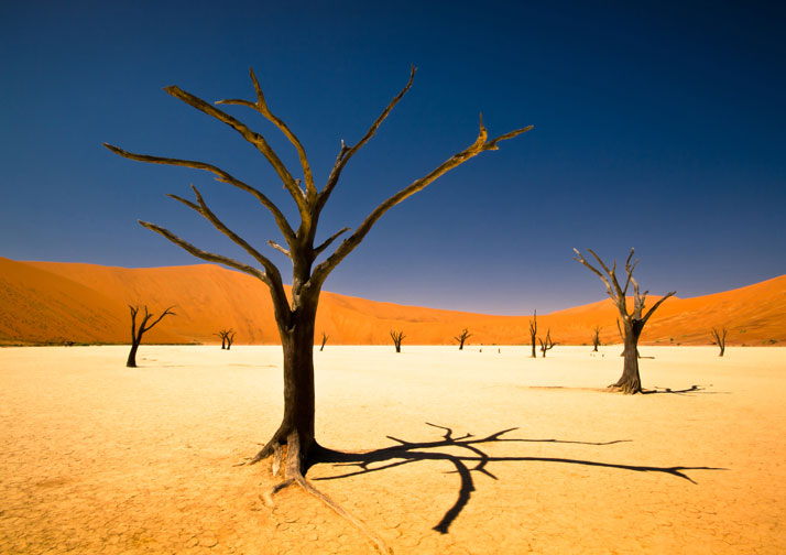 Deadvlei, Namibia, Africa.This winning entry in the youth environment section of the Sony World Photography Awards 2012.photo © Bernard Pieterse, Sony World Photography Awards 2012.