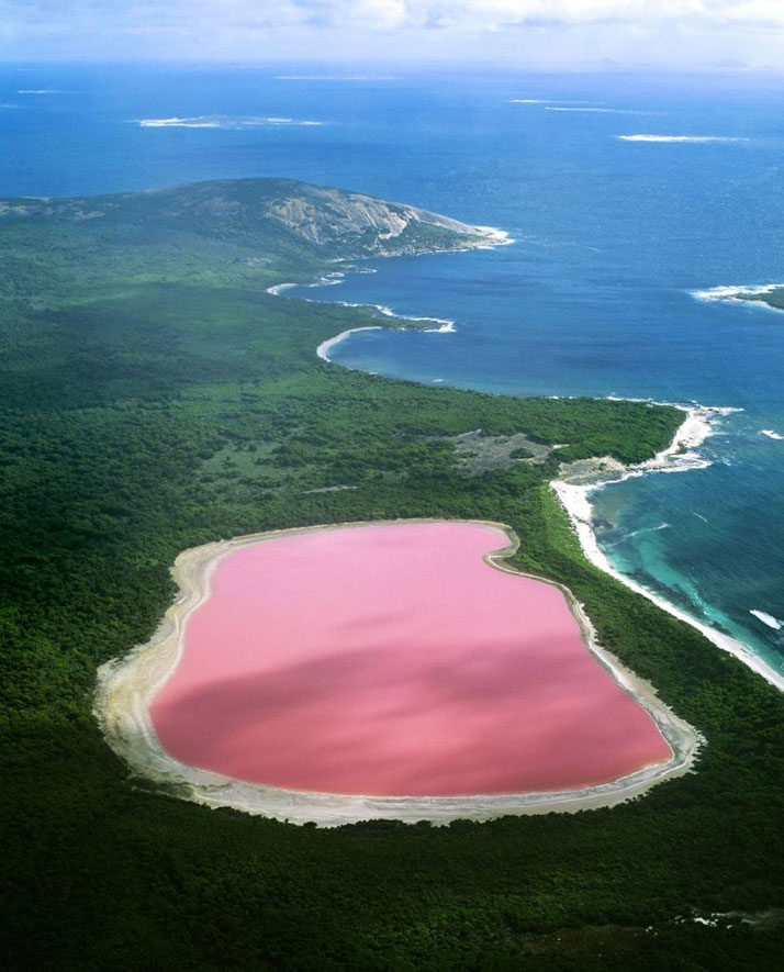 The pink Lake Hiller in Western Australia.photo © Jean Paul Ferrero/Ardea/Caters News.