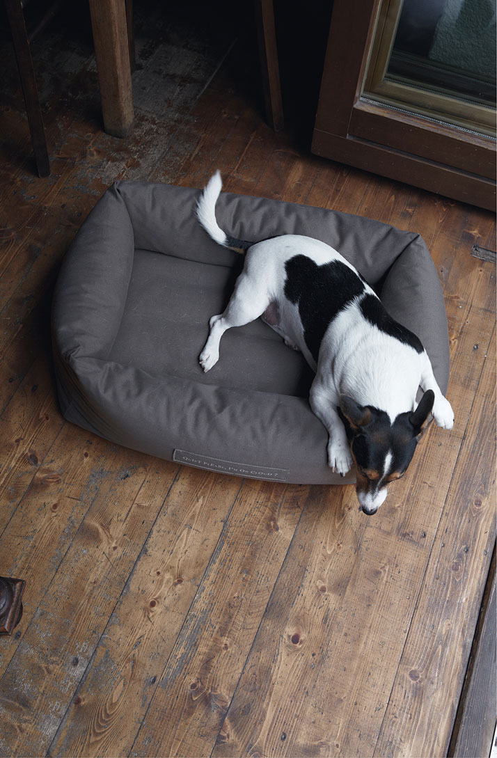 Gennaro on a SLEEPY dog bed, photo © Janne Peters.