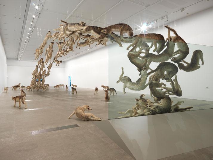 Cai Guo-Qiang (China b.1957), Head On 200699 life-sized replicas of wolves and glass wall. Wolves: gauze, resin, and hideDimensions variableDeutsche Bank Collection, commissioned by Deutsche Bank AGPhotograph: Natasha Harth, Queensland Art Gallery | Gallery of Modern Art 蔡國強 1957, 年生於中國泉州;長居美國紐約 《撞牆》200699 條真實大小的狼複製品、玻璃牆。 狼:混凝紙糊、石膏、玻璃纖維、樹脂和毛皮。 尺寸不定德意志銀行收藏Natasha Harth 攝,昆士蘭美術館暨現代美術館 提 供