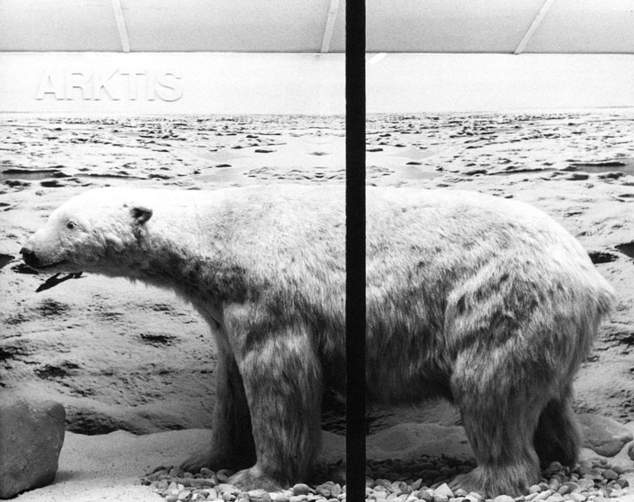 Mark Dion, Polar Bear (Ursus maritimus), Mainz Museum of Natural History, Germany. © Mark Dion.