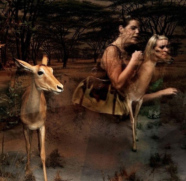 Traer Scott, Gazelle. © Traer Scott.