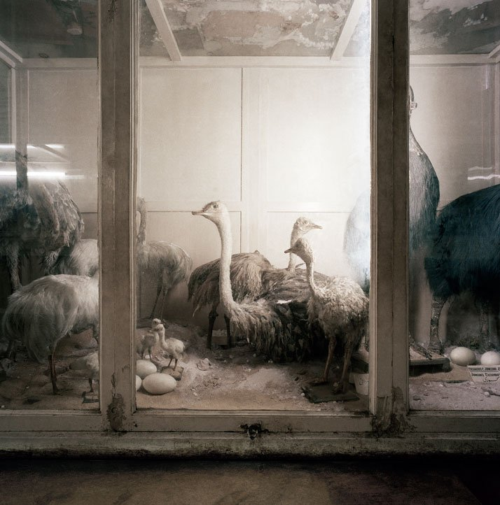 Richard Ross, Museum of Natural History Cairo, Egypt, 1984. © Richard Ross.