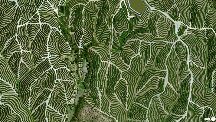 Vineyards, Huelva, Spain.Overview captured with Apple Maps. Satellite imagery from Digital Globe.Copyright 2014, Daily Overview.