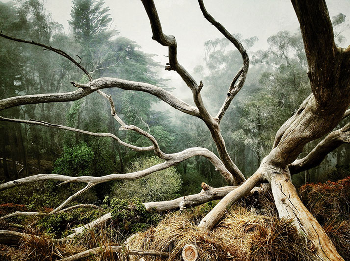 © AARON PIKE San Francisco, CA United States 1st place - Trees.