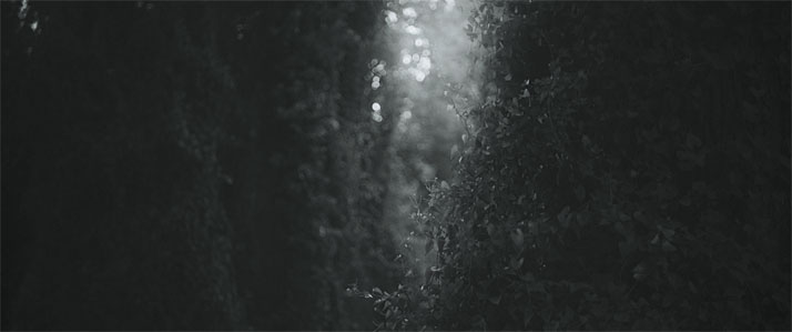 FAWNS film still, © AVION FILMS.