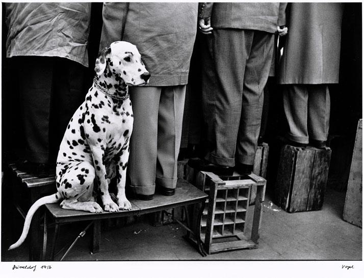Walter Vogel: Dalmatian... Not Interested in Football, Düsseldorf 1956. © Walter Vogel.
