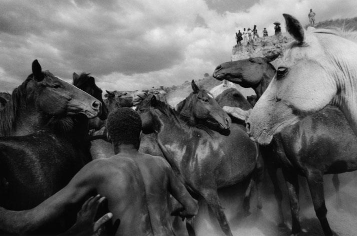 Ulrich Mack: Wild Horses in Kenya, 1964. © Ulrich Mack, Hamburg / Leica Camera AG.