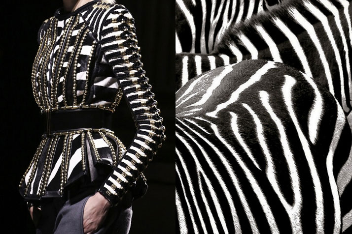 Match #168Details at Balmain Fall 2014 | Zebras