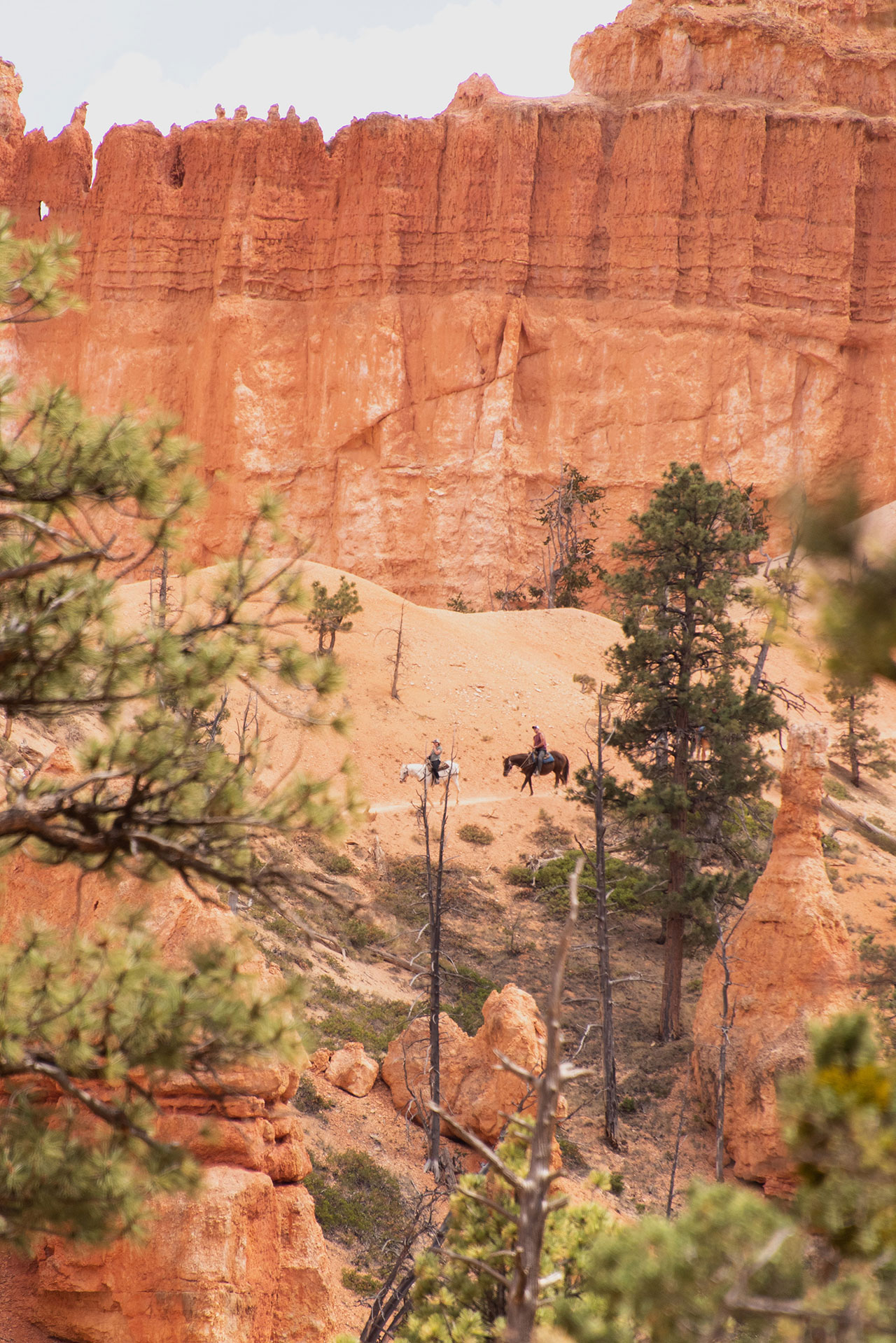 Bryce Canyon National Park. Photography by Kim and Nash Finley.