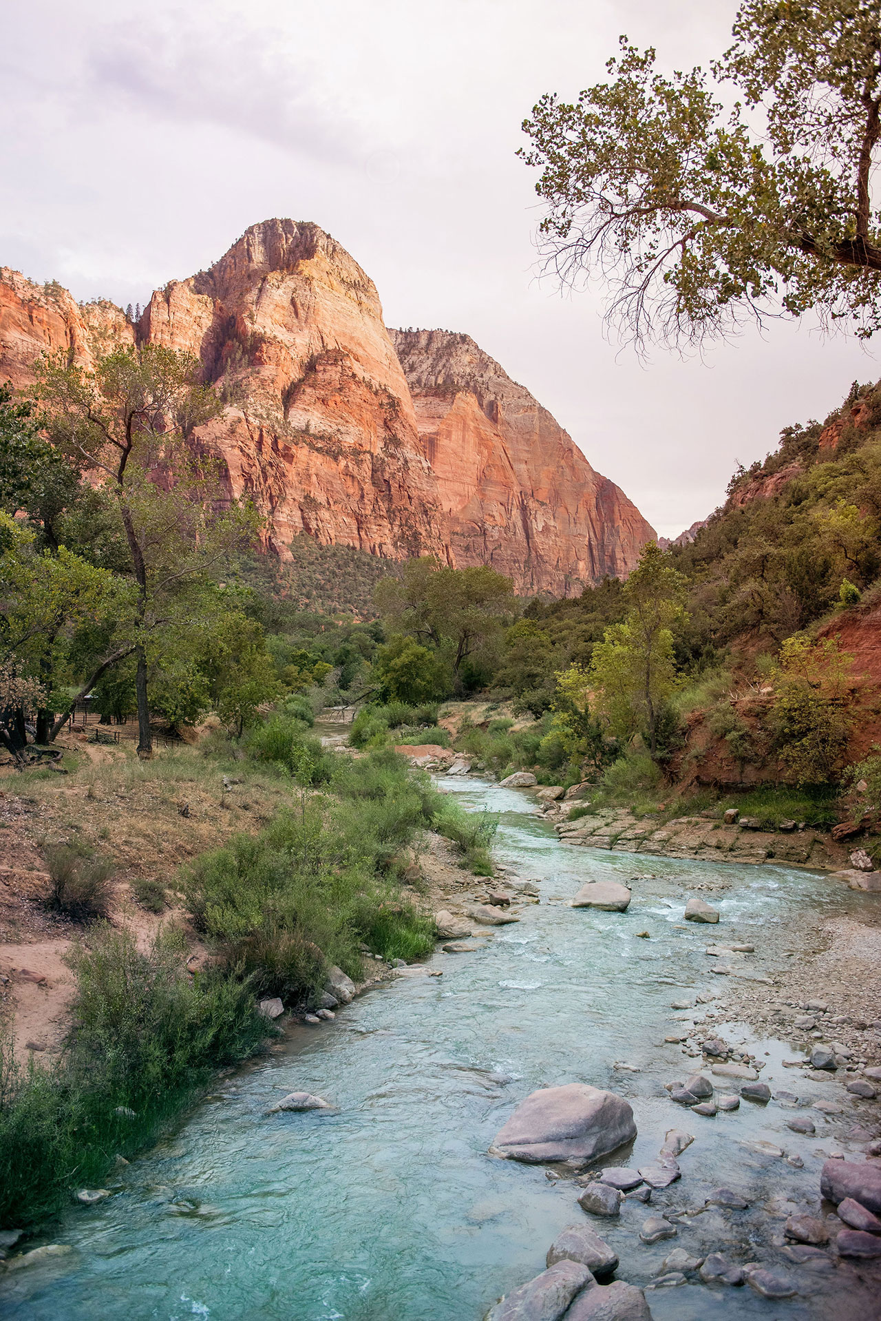 Zion National Park. Photography by Kim and Nash Finley.