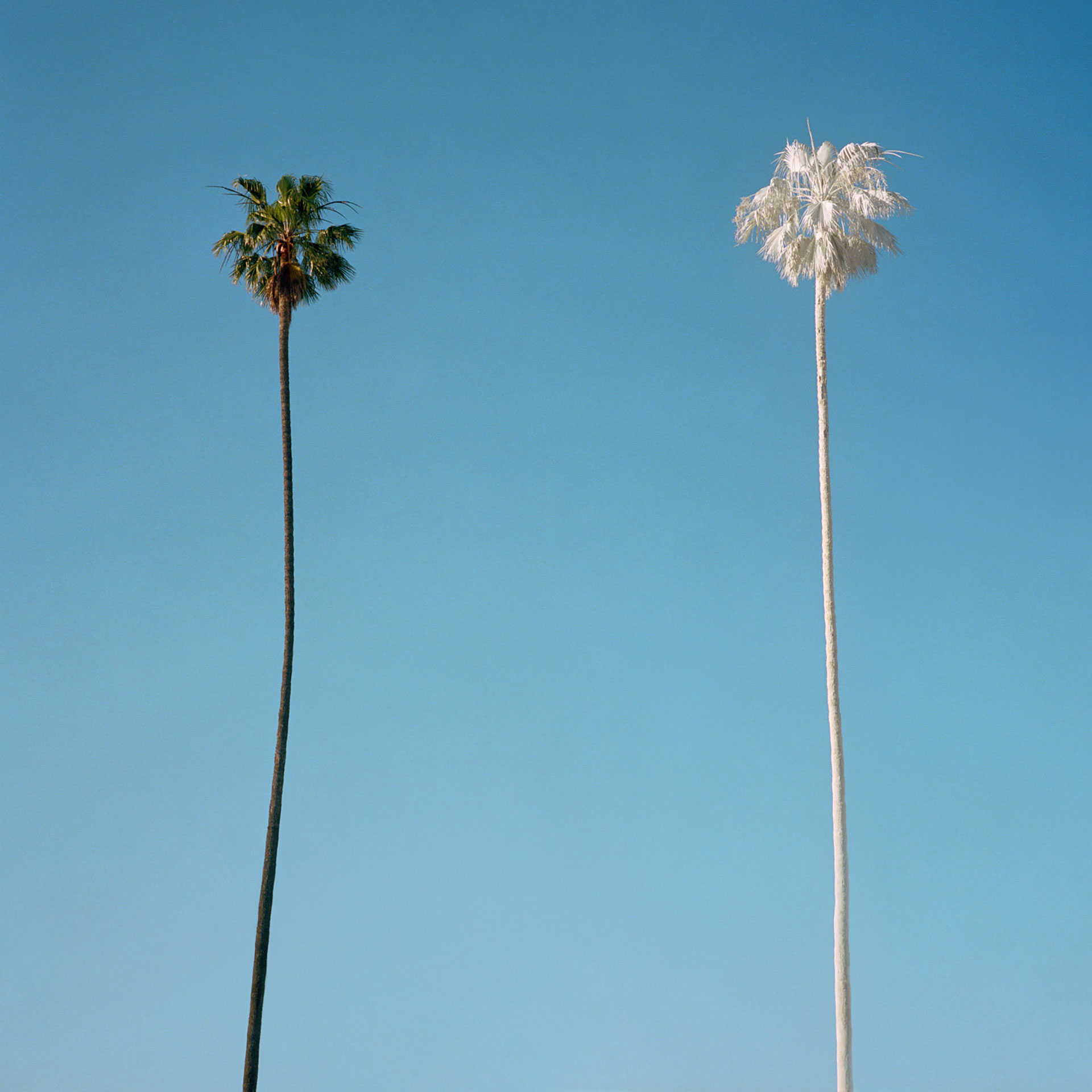 George Byrne White Palm, 2015