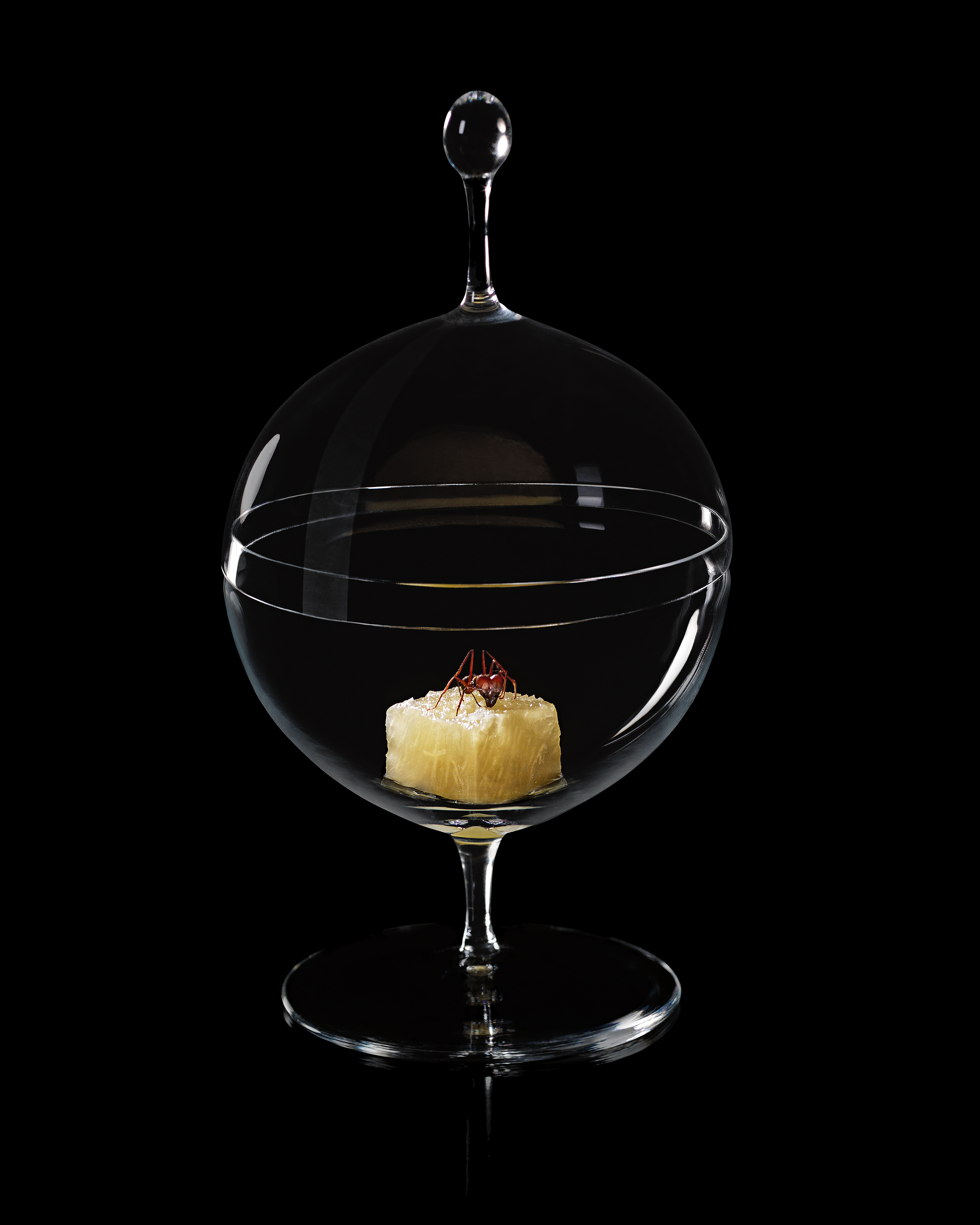 Ants and pineapple. D.O.M.: Rediscovering Brazilian Ingredients. Alex Atala. Photo © PHAIDON.