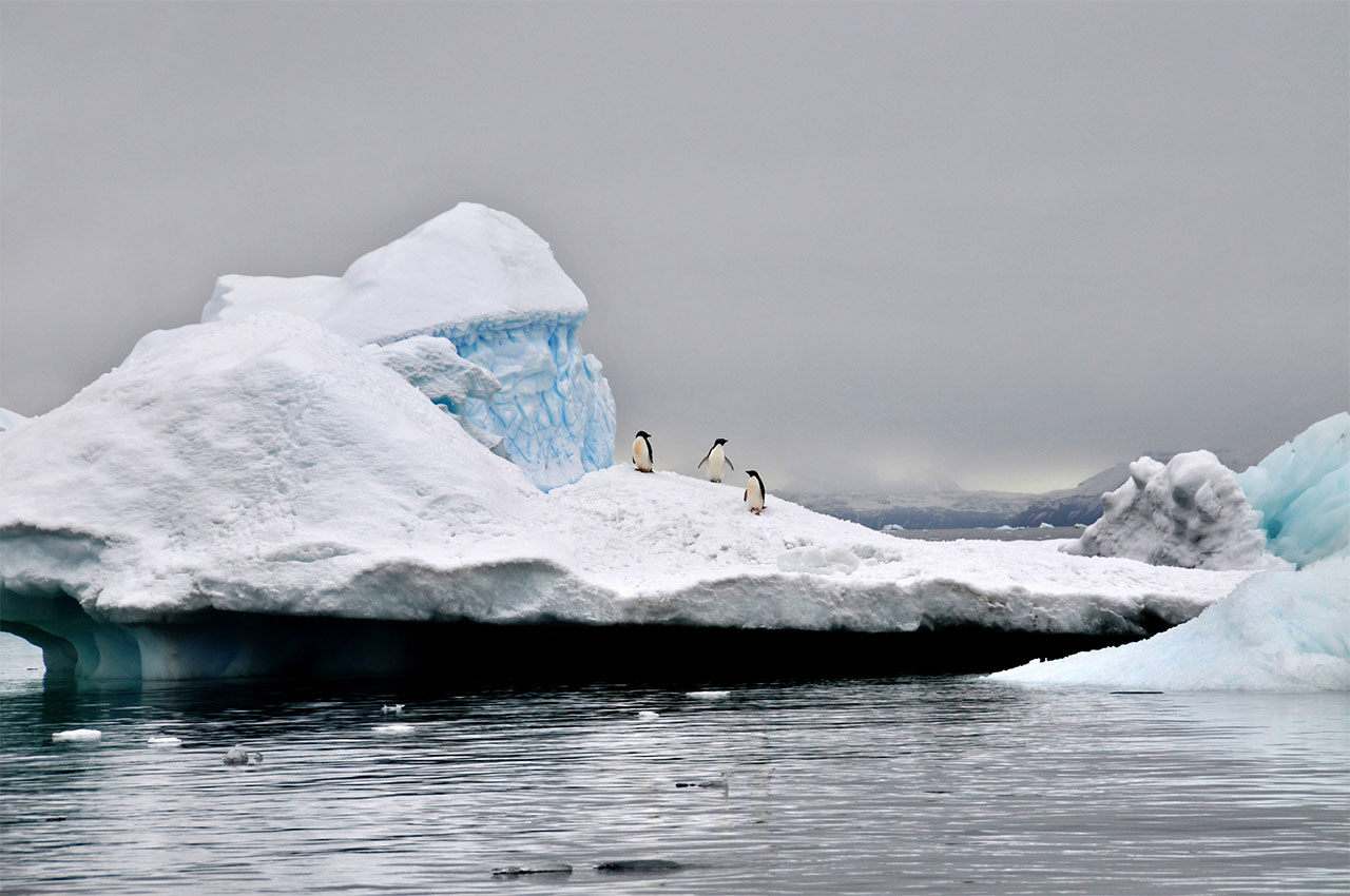 Marina Vernicos, ''Antarctica'' series, 2009.Photo Courtesy of Marina Vernicos.The photo which wan the NATURE section, NATIONAL GEOGRAPHIC Award in 2009.