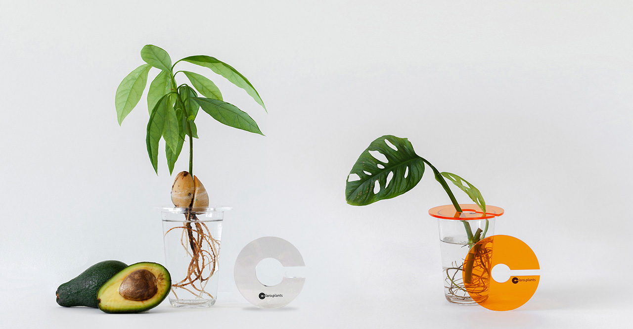 Plant Holder © Claroplants.