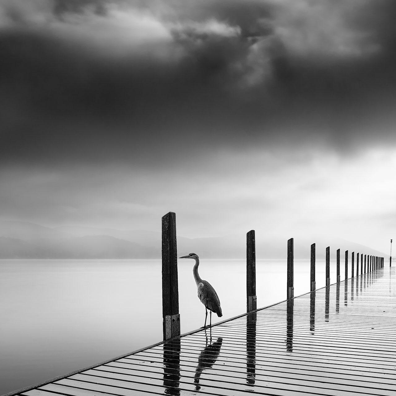 George Digalakis,Rain bird. ©George Digalakis.