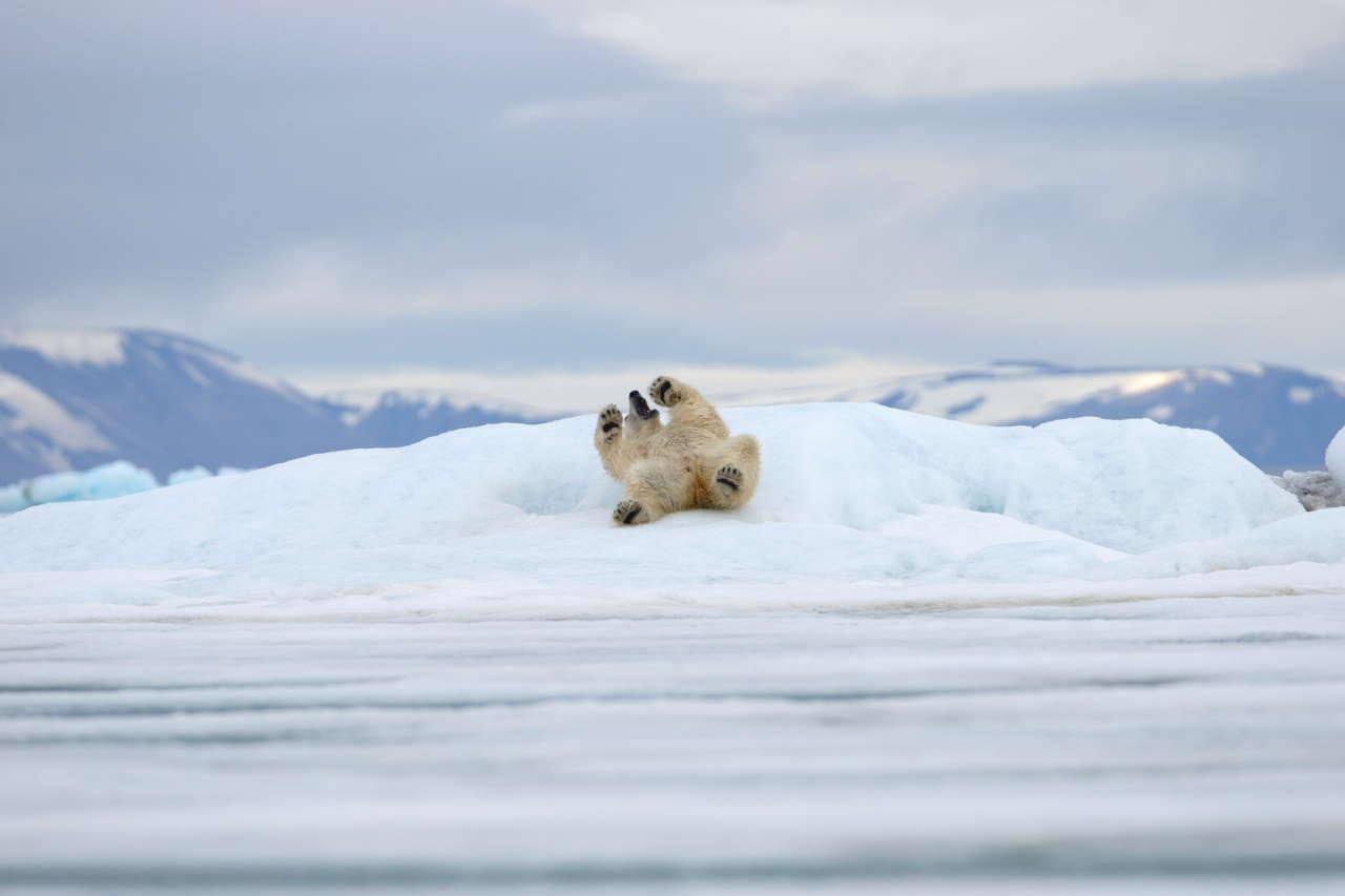 Bakanbukta, Svalbard, Norway.Photo by Michel Rawicki © ACC Arts Books Ltd © Albin Michel.