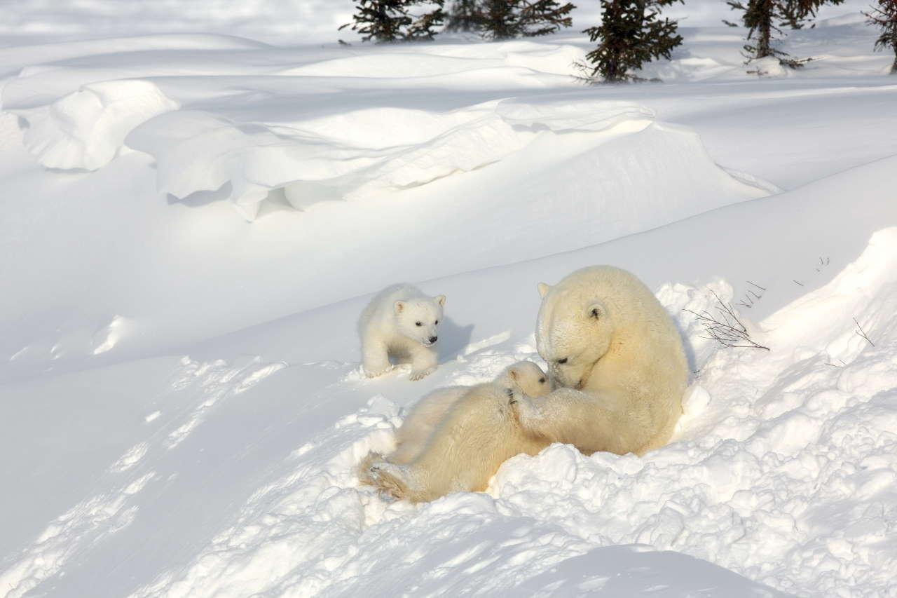 Wapusk National Park, Manitoba, Canada.Photo by Michel Rawicki © ACC Arts Books Ltd © Albin Michel.