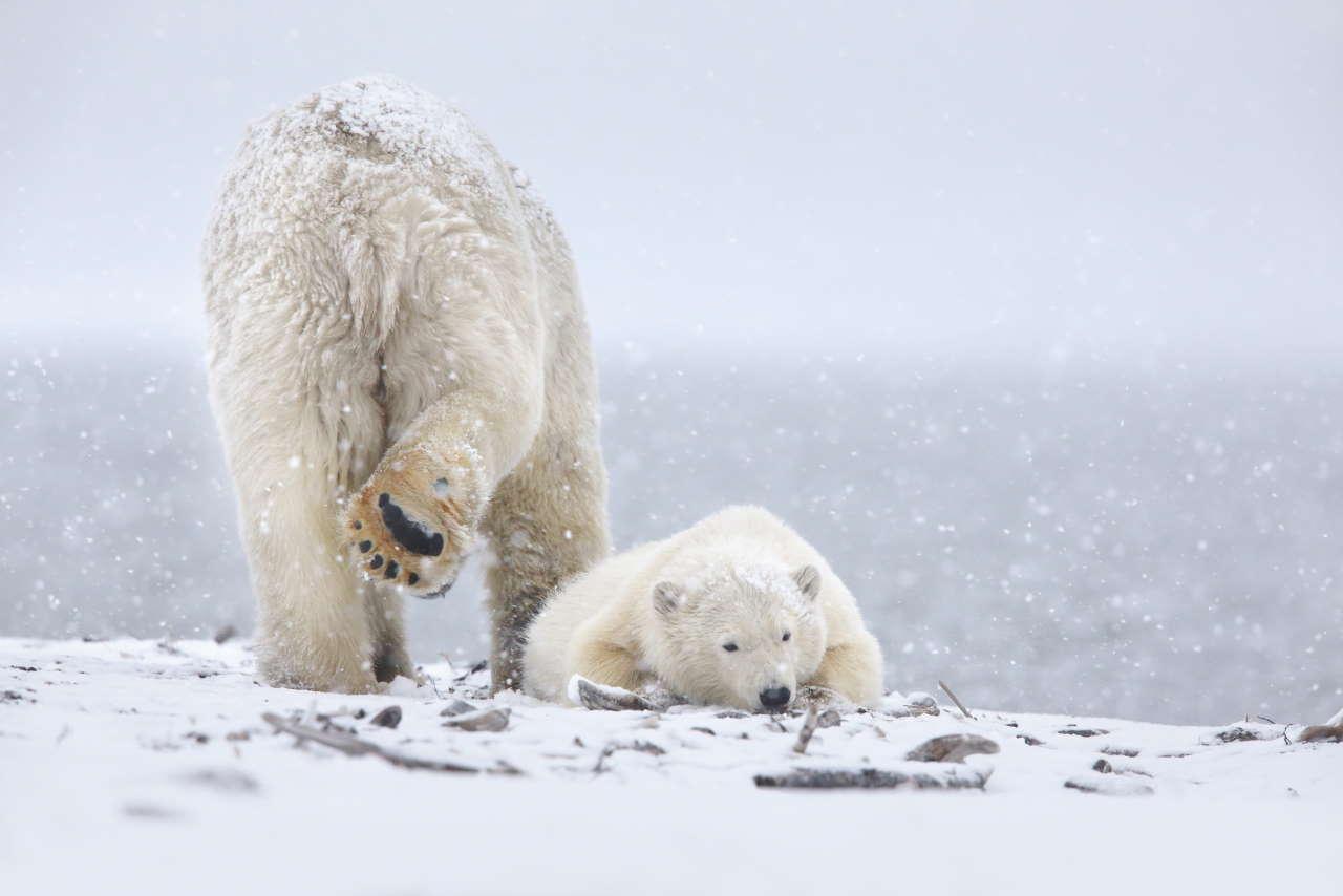 Kaktovik, Barter Island, Alaska, USA.Photo by Michel Rawicki © ACC Arts Books Ltd © Albin Michel.