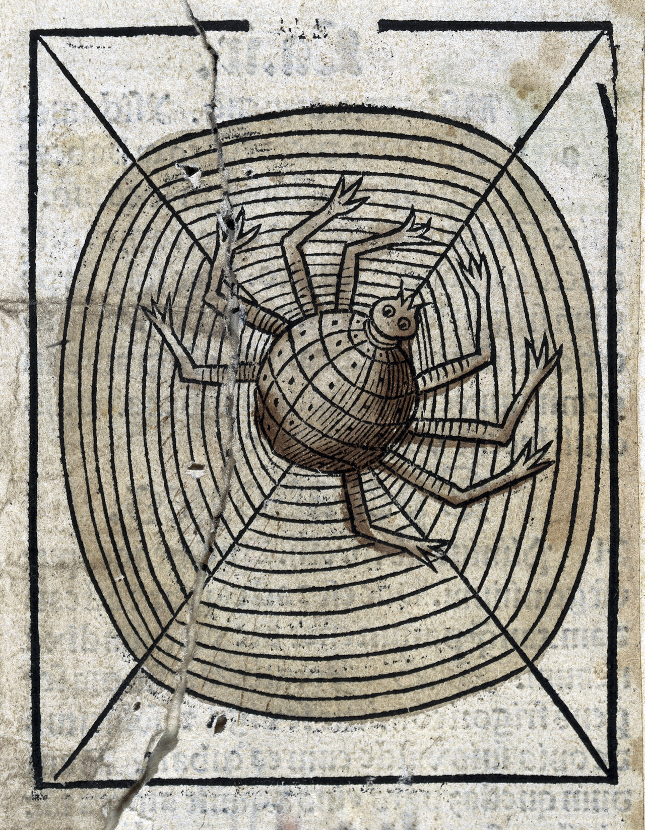 Anonymous, A spider on its web, 1547. London, Wellcome Collection.
