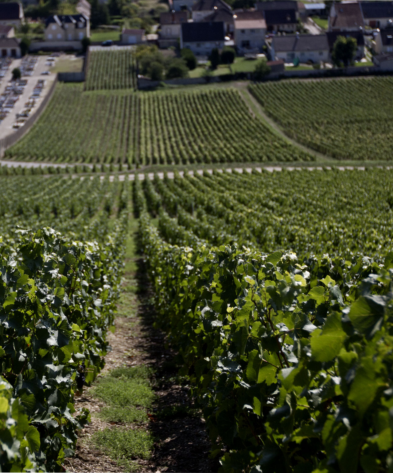 Dom Pérignon 'Pinot noir' vineyards in the Champagne region of France. Photo by Costas Voyatzis for Yatzer.