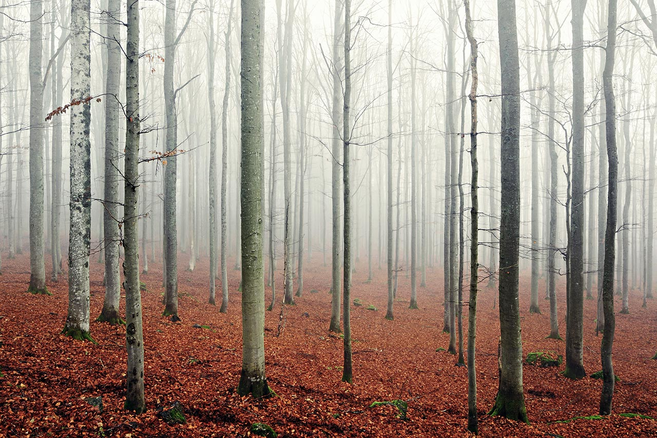 Bavarian Forest, Germany. Photo by Kilian Schönberger, from 'The Great Wide Open', © Gestalten 2015.