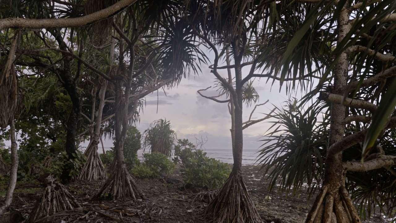 Julian Charrière,Iroojrilik, 2016. 4K color video with stereo sound, sound by Edward Davenport, 21'3'' (loop). Courtesy the artist; DITTRICH & SCHLECHTRIEM, Berlin; Galerie Tschudi, Zuoz; Sean Kelly, New York; Sies+Höke, Düsseldorf.