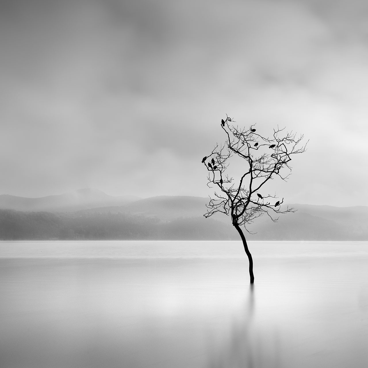 George Digalakis, Winter birds. © George Digalakis.