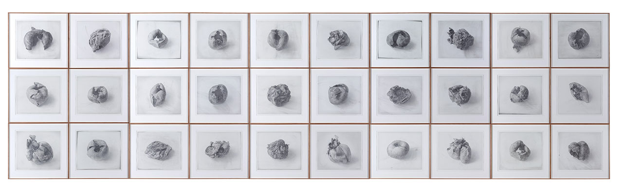 Cheong Do. Dried Persimmon. (40 pieces), 2000. Graphite on paper, 51 x 54 cm each. © Lee Bae.