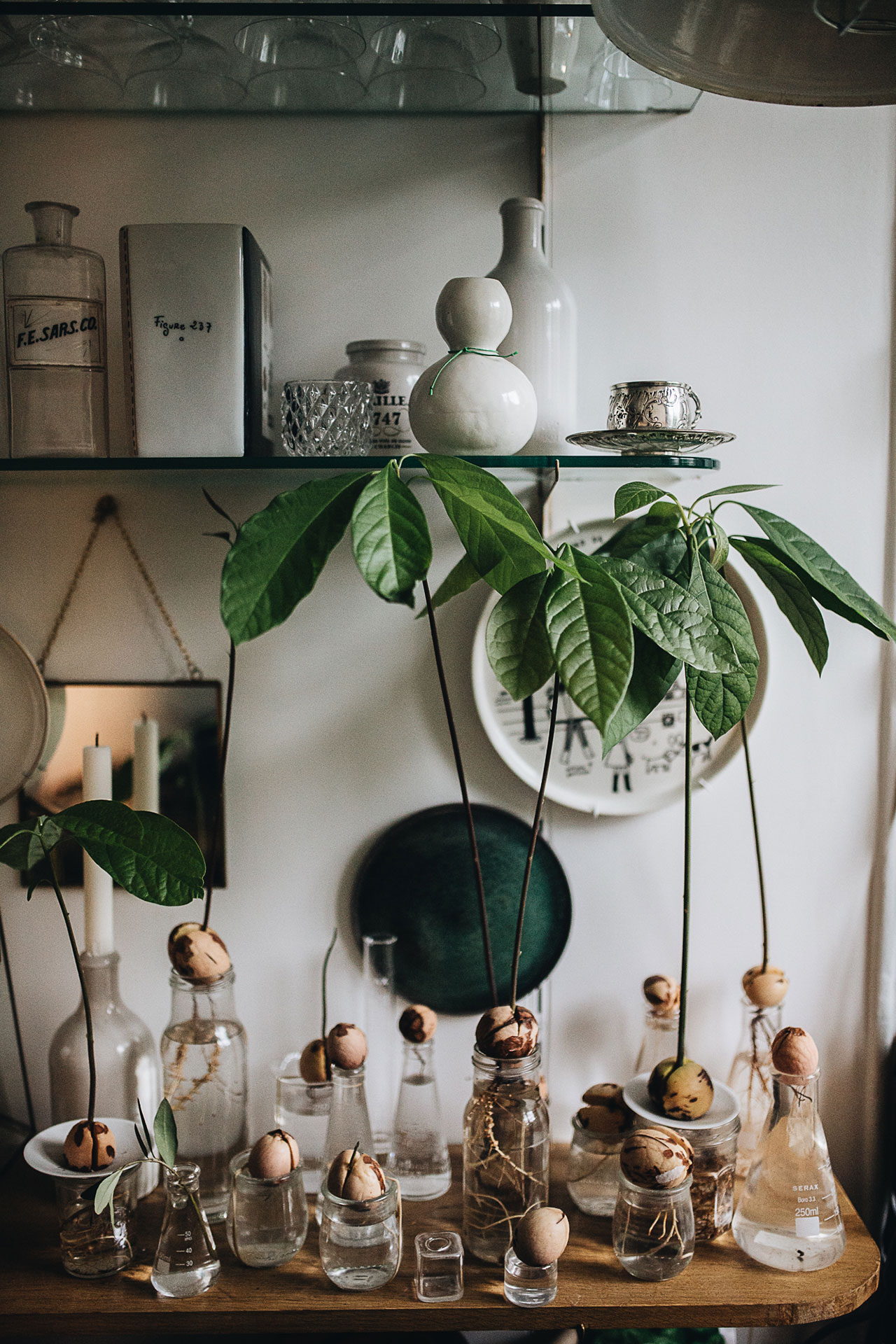 PLANT TRIBELIVING HAPPILY EVER AFTER WITH PLANTSBy Igor Josifovic & Judith de Graaff Photo: The home ofRebecca Breach In Paris.Photography by Jules Villbrandtfor Urban Jungle Bloggers.