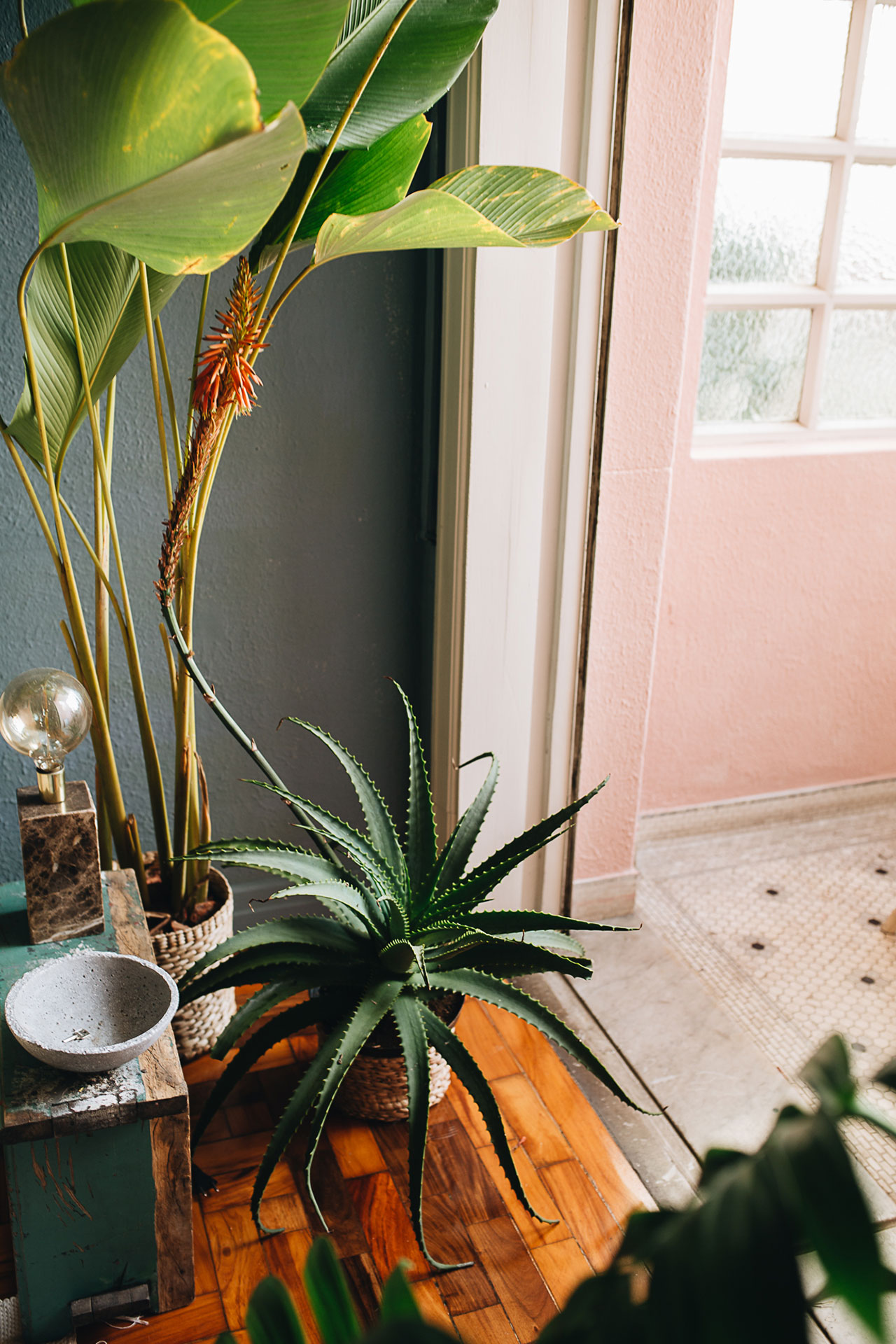 PLANT TRIBE LIVING HAPPILY EVER AFTER WITH PLANTSBy Igor Josifovic & Judith de Graaff Photo: The home of Derek Fernandes in São Paulo, Brazil.Photography by Jules Villbrandt.
