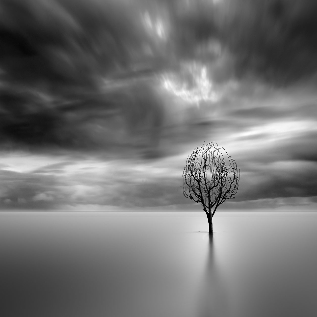 George Digalakis, Lonely tree. © George Digalakis.