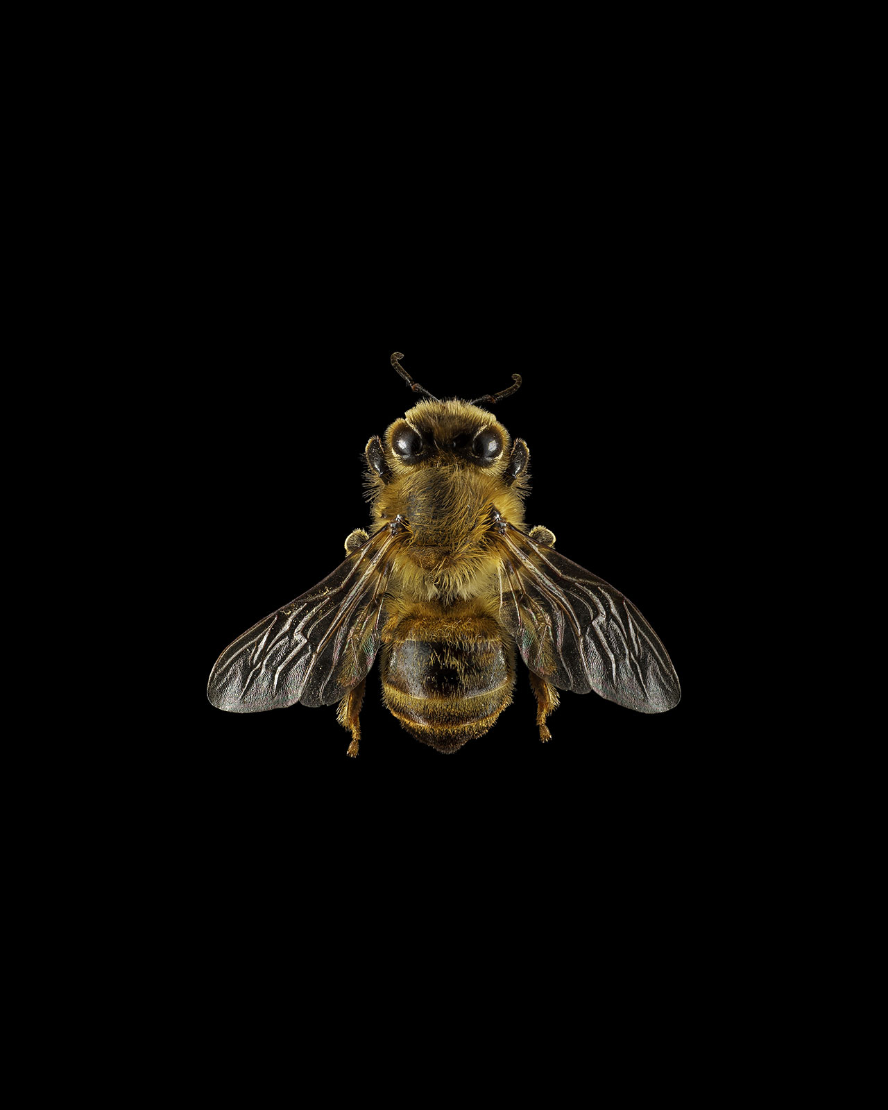 For the Rest of Us A project by Hank Beyer and Alex Sizemore. Honey.