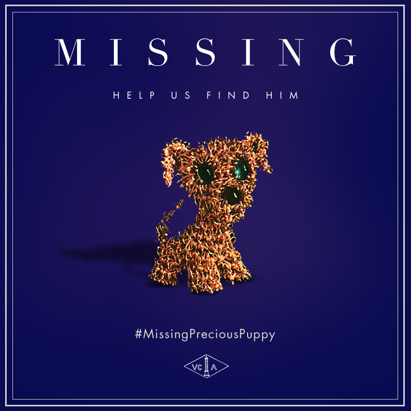 #MissingPreciousPuppy poster