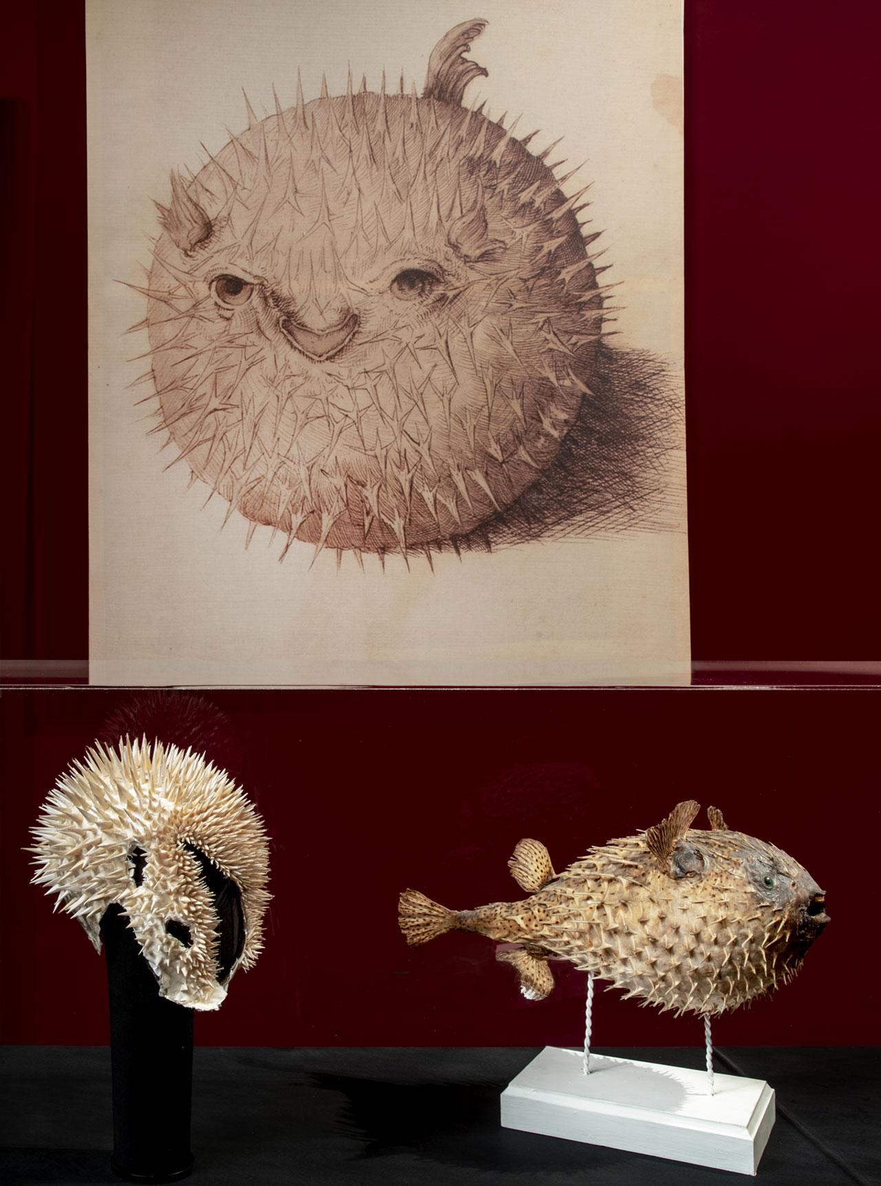"Katsuya Kamo, ""White spikes""Hat, 2010. Porcupine fish, Firenze, Museo di Storia Naturale, La Specola. Photo© Antonio Quattrone."
