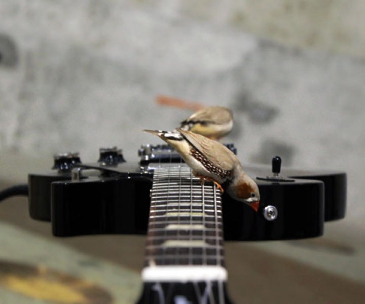 The Rock 'n' Roll birds of Céleste Boursier-Mougenot