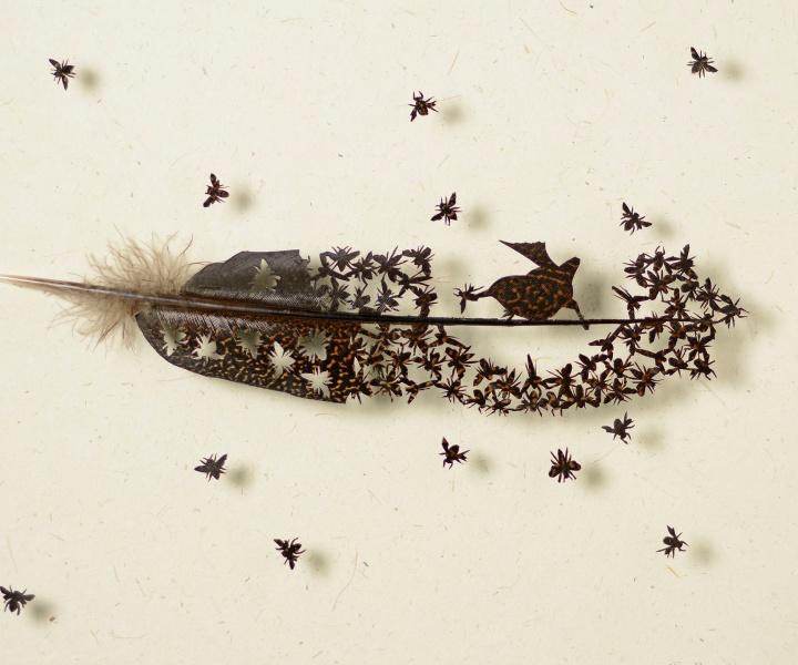 Flights of Fancy: Bird Feather Art by Chris Maynard
