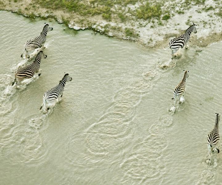 Kalahari Revisited: Zack Seckler's 'Botswana' Photography Exhibition