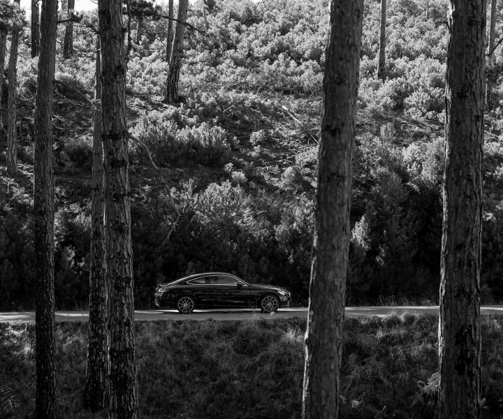 Driving Through The Woods of Euphoria