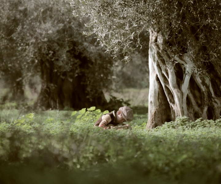 A Visual Journey into the Olive Groves of Crete