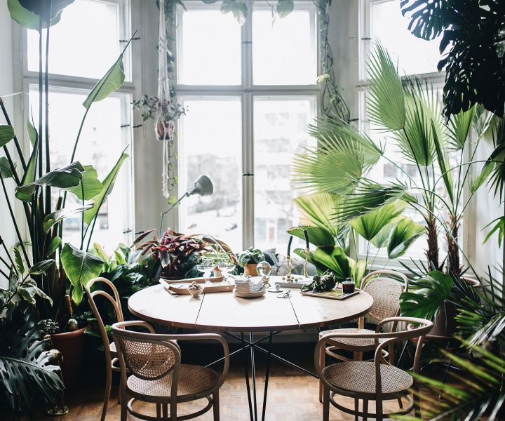 Plant Tribe: Igor Josifovic & Judith de Graaff Explore the Life-Changing Magic of Houseplants