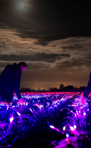 GROW: Daan Roosegaarde's Light Installation Poetically Heralds the Future of Agriculture